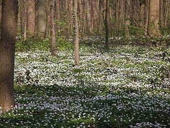 bos van Ranst