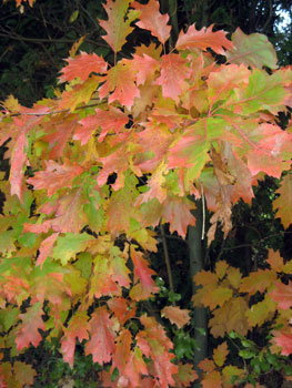 herfstkleuren - Wout Janssens