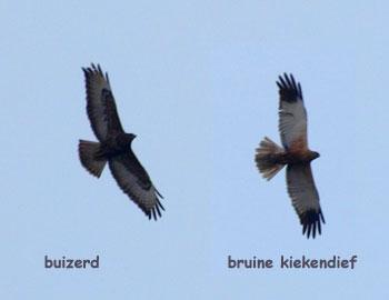 vliegbeelden roofvogels
